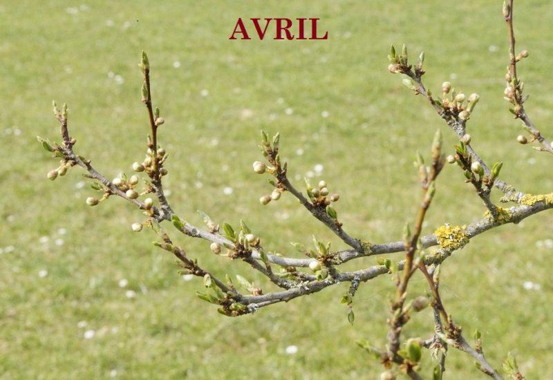 4-AVRIL