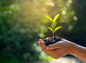 La Montérégie reçoit une aide financière pour lutter contre les changements climatiques