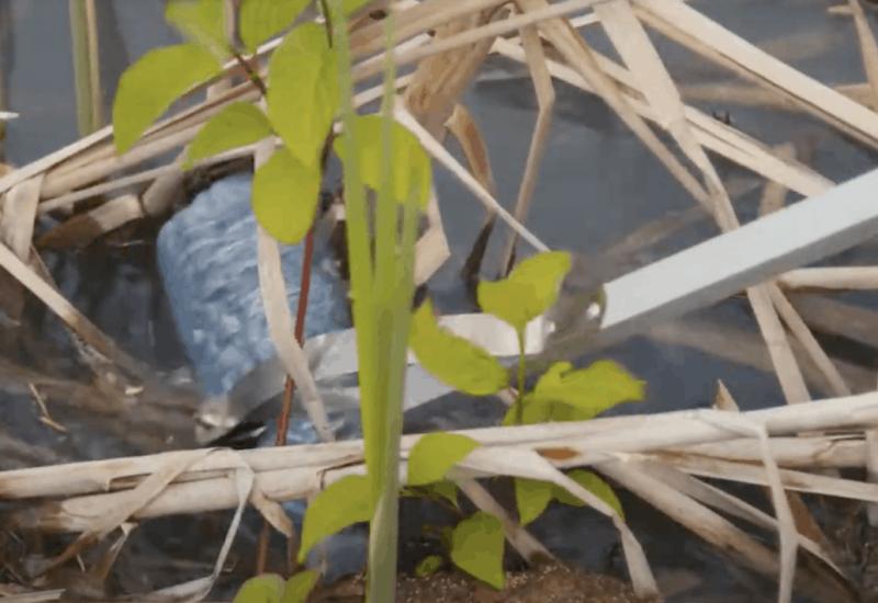 Des centaines de kilos de déchets sortis du Fleuve