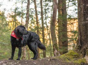 Un jeune et son chien Mira se font intimidés au parc Michel-Chartrand