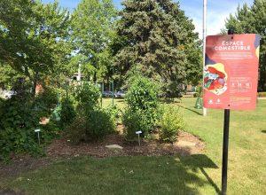 Des arbres et des plants comestibles au parc Mercille