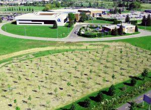 Hydro-Québec plante 360 arbres à Saint-Bruno