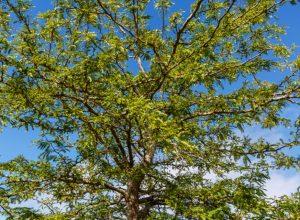 Le Jour de l'arbre reprend cette année pour la ville de Brossard