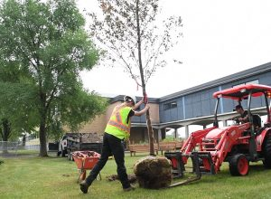 Des centaines de nouveaux arbres au CSS Marie-Victorin