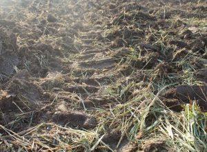 Terrain avec traces de tracteur