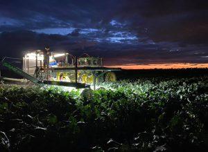 Un robot cueilleur de légumes inventé à Varennes
