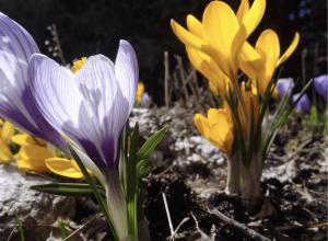 Créer son pot fleuri, un atelier offert par St-Bruno et la Société d'horticulture et d'écologie de St-Bruno.