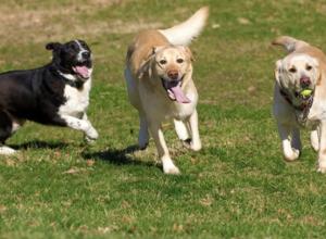 parc canin