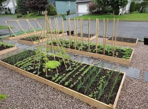 Brossard Uni promet de développer l'agriculture urbaine