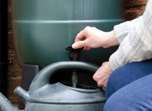 Baril récupérateur d'eau de pluie