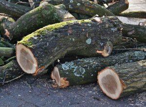 Entente à l'amiable à la suite d'abattage d'arbres
