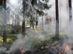 Mauvaise qualité de l'air sur la Rive-Sud : les feux de forêt à blâmer
