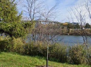 Le fleuve Saint-Laurent baisse de niveau