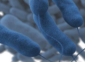 La santé publique rapporte trois cas de légionellose à Sainte-Julie
