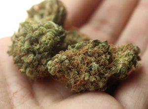 Saisie d'une maison à Varennes en lien avec une affaire de cannabis